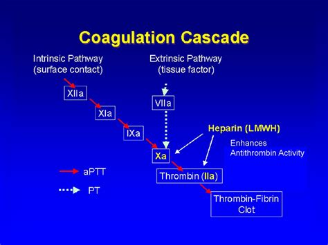 Anticoagulant, Antiagregant Therapy - презентация онлайн