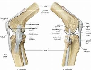 Knee  U0026 Leg