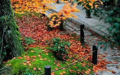 Autumn Courtyard Enkoji Temple Kyoto Wallpapers Grass