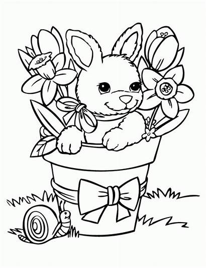 Coloring Pages Bunny Printable Popular