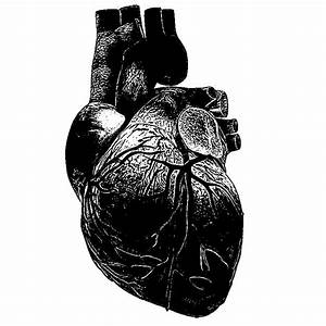 Ink Drawing - The Heart by A-Missing-Link on DeviantArt