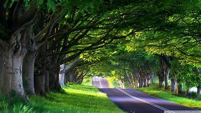 Street Tree Trees Wallpoper Lined Nature