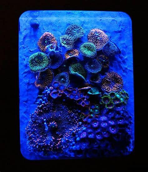 xbox  pico reef aquarium  blue world aquariums