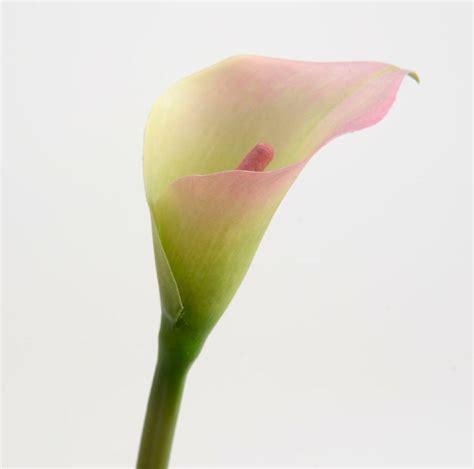 calla artificiel clair fleurs artificielles