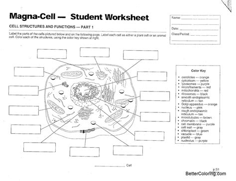 animal cell coloring pages magna cell structures