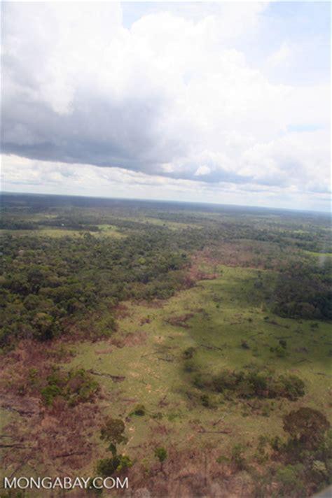 scrub vegetation  secondary forest