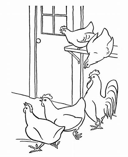 Coloring Chicken Pages Chickens Farm Hens Printable