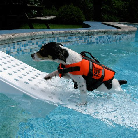 Water Safety For Dogs  5 Quick Tips  Dog Ramp
