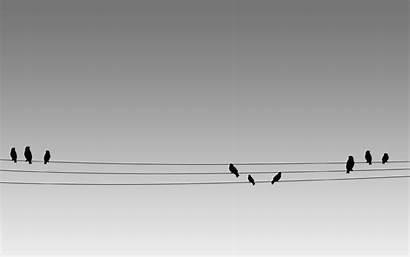 Birds Desktop Nature