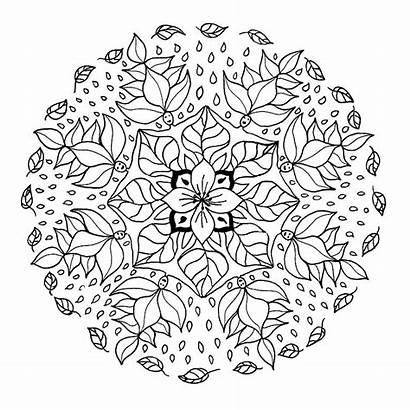 Mandala Flores Colorear Mandalas Coloring