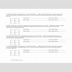 Pea Plant Punnett Square Worksheet 7th  12th Grade Worksheet  Lesson Planet
