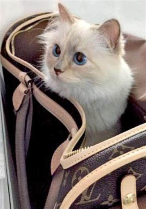 karl lagerfelds cat choupette earns   year daily