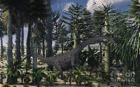 A Young Diplodocus Dinosaur Feeding Digital Art By Mark