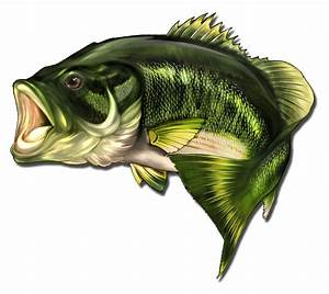Pair 12 U0026quot  Inch Large Mouth Bass Fish Decal Vinyl Boat