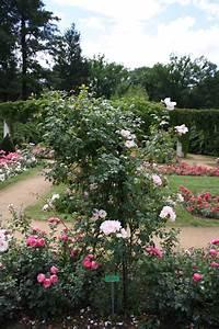 Rosen Kaufen Günstig : rosen g nstig online kaufen im lorberg online shop gro h ndler f r rosen ~ Markanthonyermac.com Haus und Dekorationen