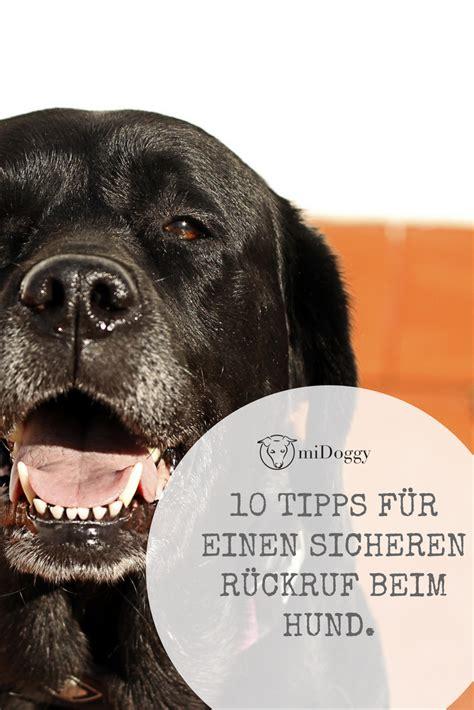 tipps und tricks fuer den sicheren rueckruf hunde