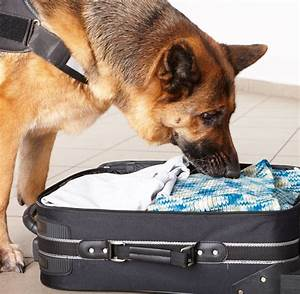 Sniffer Dogs - The Very Best Way To Follow Your Nose!