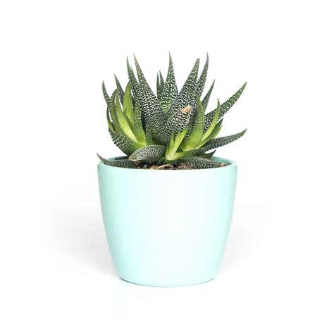 decorative artificial plant woondershop jungle