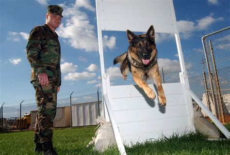 Fileus Navy F  Patrol Dog Obstacle Course