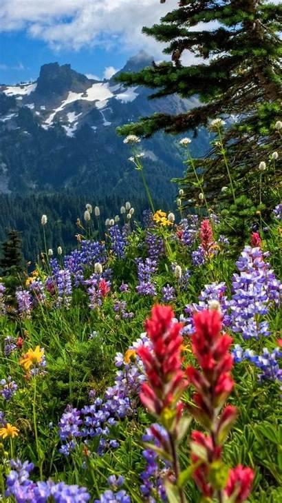 Flowers Wallpapers Iphone Wild Wildflowers Flower Mountain