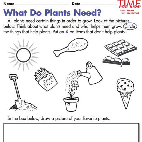 plant worksheets for kindergarten search
