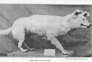 Dog Breeds That No Longer Exist