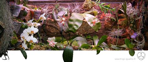 pot transparent pour orchidee cultiver les phalaenopsis tropi qualit 233