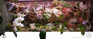 Grand Bac Pour Orchidées : cultiver les phalaenopsis tropi qualit ~ Melissatoandfro.com Idées de Décoration