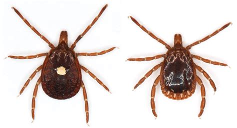 Ticks To Look Out For
