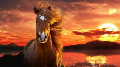 Horse Backgrounds Desktop 1080p Wallpapers Background Computer