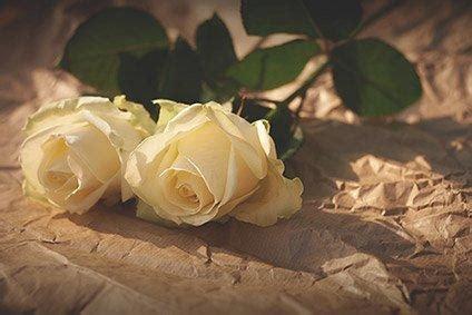gelbe blumen bedeutung blumen und kr 228 nze die beerdigung bedeutungen und mehr