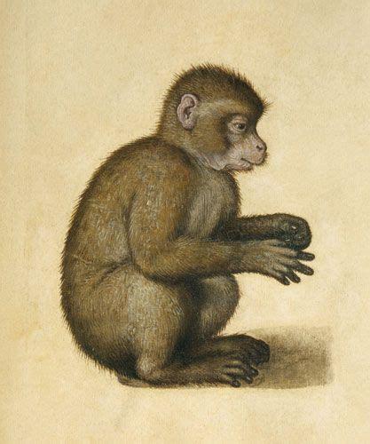 monkey wc gouache  paper watercolour