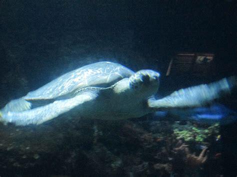 les alsh 224 l aquarium marin du cap d agde 171 agenda 171 le officiel de la ville de poussan