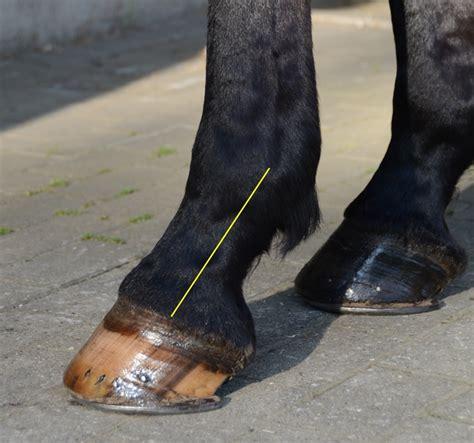 pferde korrekt beschlagen und richtig stellen los