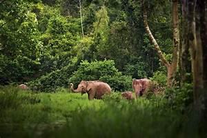 Asian Elephants - WCS.org