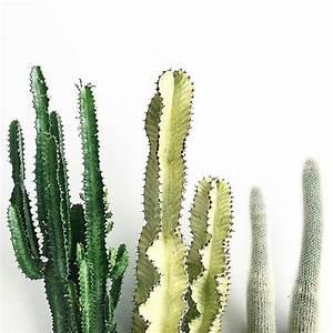 The 25+ best Tall cactus ideas on Pinterest | Indoor ...