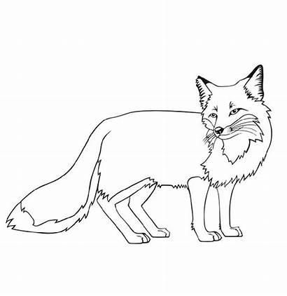 Fox Coloring Pages Kit Printable Poses Various