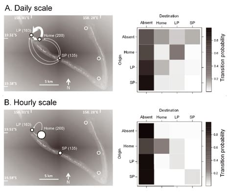 temporal movement residency scales grouper using two daily publication
