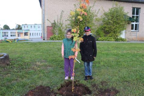 Laimes koka stādīšana Aleksandrovas pamatskolā