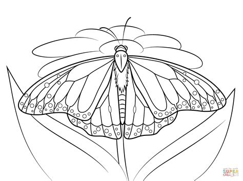 monarch butterfly sits   daisy coloring page