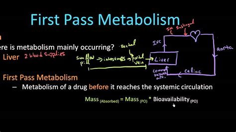 pass metabolism pharmacology lect  youtube