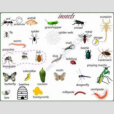 Insects  Visual Vocabulary  Materials For Learning English