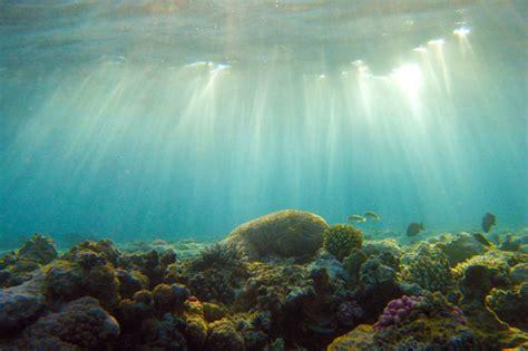 journee mondiale de locean les fonds marins bien moins