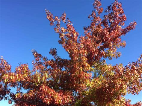 why do leaves change color in fall why do leaves change color in the fall the produce