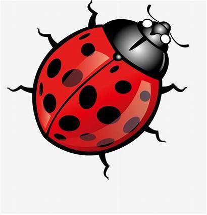 Clipart Bug Cartoon Transparent Webstockreview