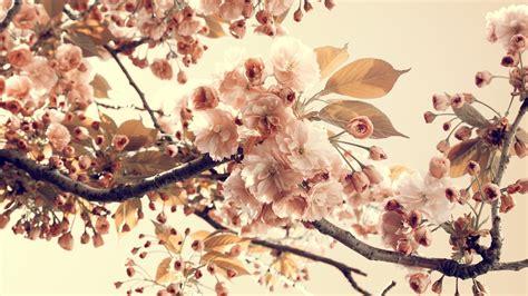 vintage flower wallpapers   pixelstalknet