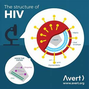 The Structure Of Hiv