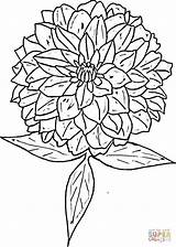 Zinnia Coloring Flower Printable Drawing Flowers Zinnias Supercoloring Colouring Nature Version Sheets Designlooter Tattoo Tablets Ipad Compatible Android Sketches Getcolorings sketch template