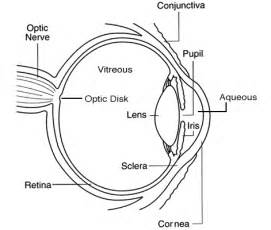 earthiris empiric common sense scientific blog of With eyediagramjpg