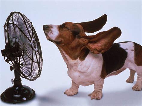 petit ventilateur de bureau 10 astuces pour se rafraîchir sous cette chaleur fitness mag